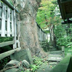 浅間温泉の風景